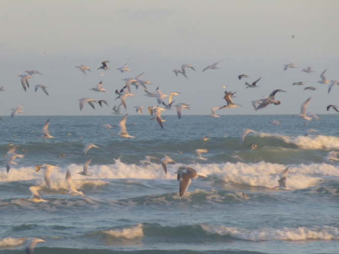 Flight of the Sea Gulls