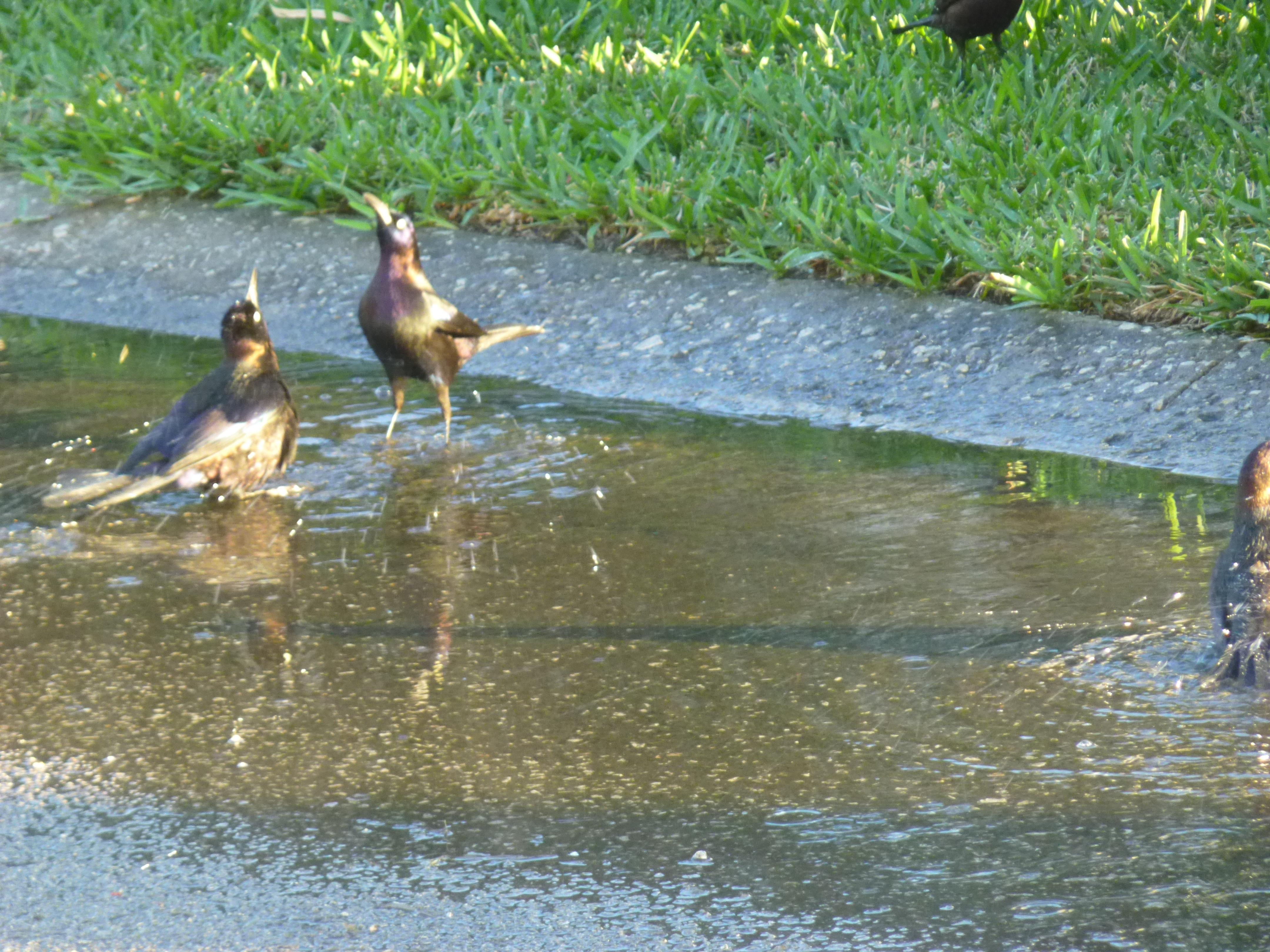 Spring rain puddle bath elegantly handmade for Bathing images