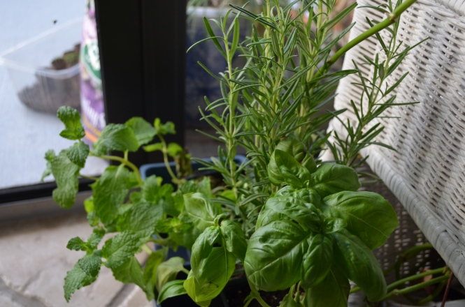 Organic herb patio garden
