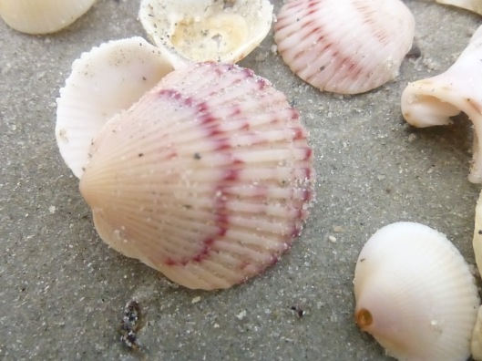 'tis a fragil shell