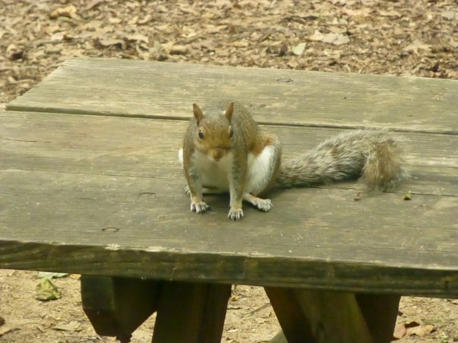youtube Squirrel Nutkin