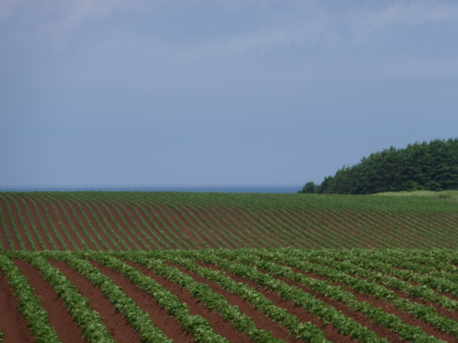 Prince Edward Island Potato fields light houses red sand sea shores beaches  Anne of Green Gables  Lucy Maud Montgomery