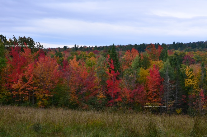 Water color of nature photography Autumnal colors North East Kingdom Vermont Fall in New England states yankee states