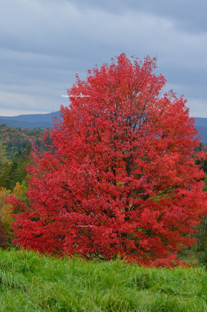 elegantlyhandmade Majestic fall in North east Kingdom Vermont Autumnal Color in New England States Traveling in North East Tasha Tudors vermonts