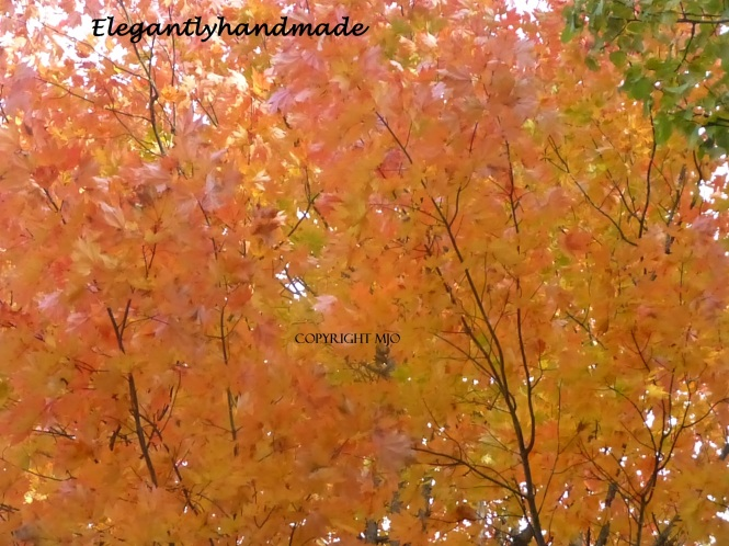Fall Foliage in Vermont Autumnal Color in New England States Fall Autumn in the North Eas tKingdom Vermont Fall in Tasha Tudors Vermont