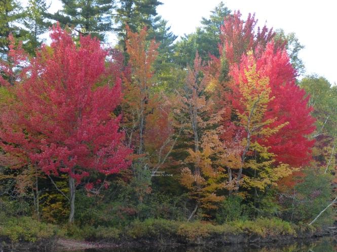 Autumn Poetry An Autumn Day Eleanore Meyers Jewett Fall Brighton state park vermont Northeast kindom traveling Yankee New England States Tasha Tudors Vermont