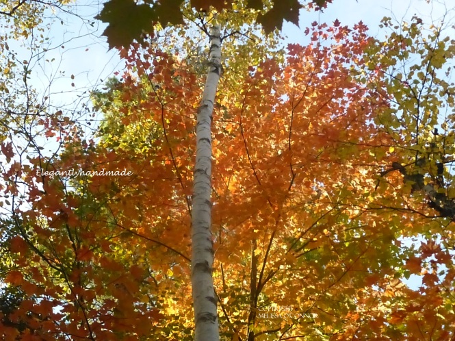 Autumns Wizardry An Autumn Day Poetry Eleanore Meyers Jewett Fall Vermont Brighton State Park Traveling North east Kingdom Autumn in New England Yankee states Tasha Tudors Vermont