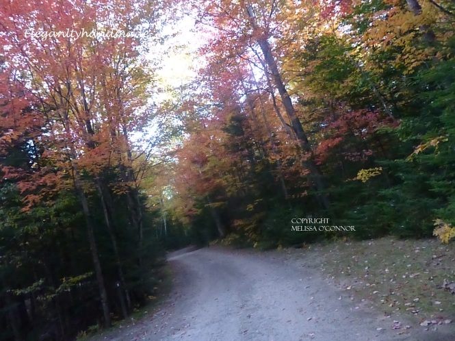 Enchanted Fall Northeast kingdom Vermont Brighton State Park  Autumn Yankee New England States Fall Traveling Fall poetry An Autumn Dy