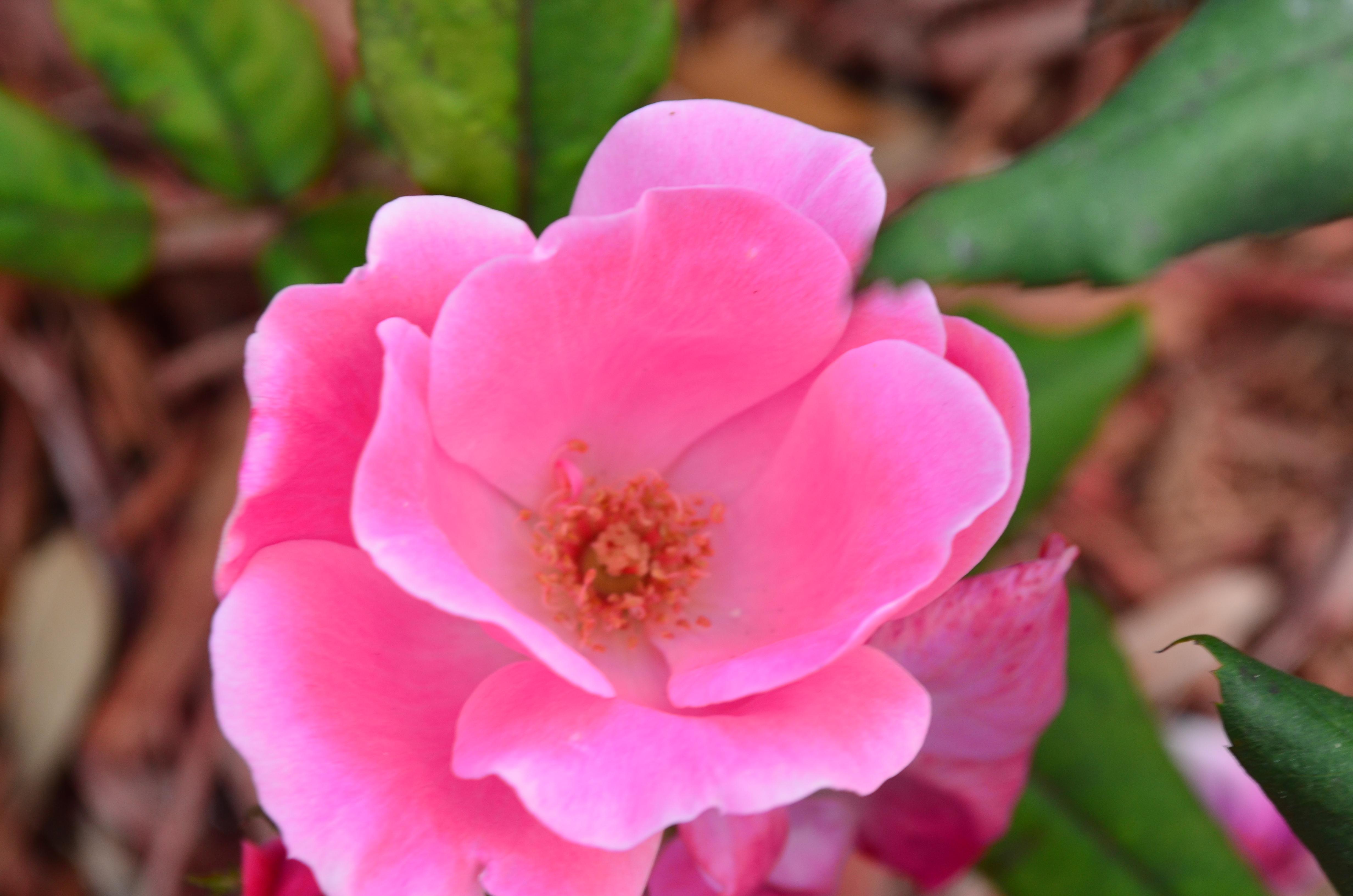 spring time spring pink elegantly handmade. Black Bedroom Furniture Sets. Home Design Ideas