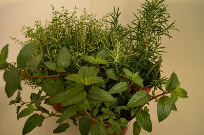 Fresh spring herbs Spring gardening Patio gardening cottage garden