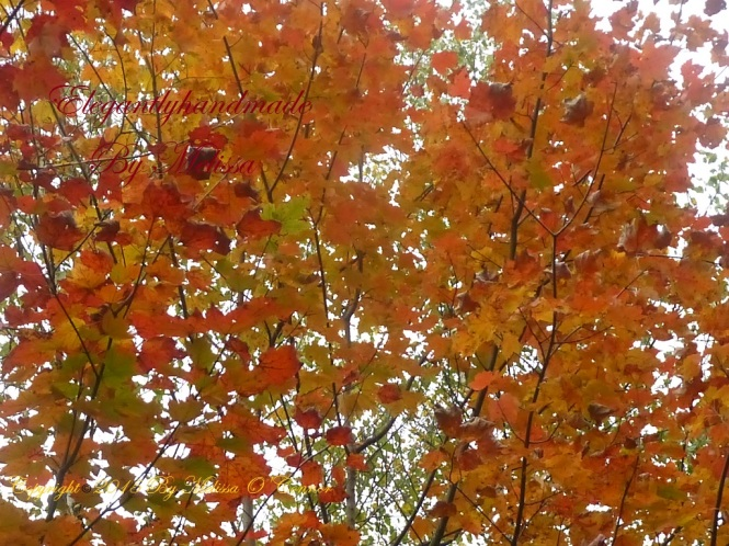Every leaf speaks bliss to me emily bronte poetry fall foliage New England autumn in Vermont leaf peeping in Vermont