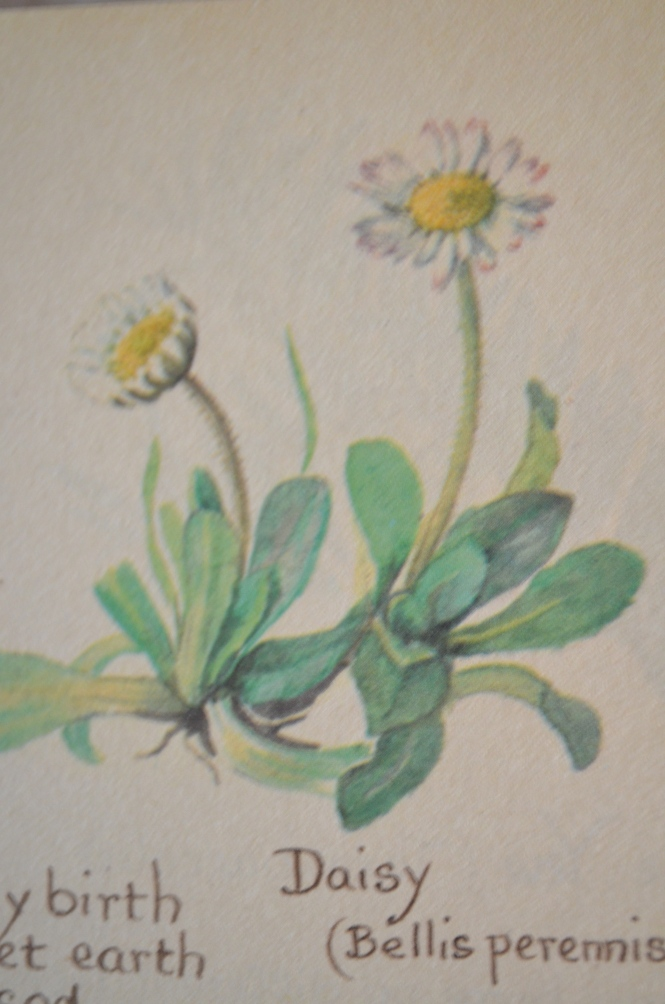Country Diary of AN Edwardian lady Daisy poetry Old January 2016 Fletcher Wordsworth