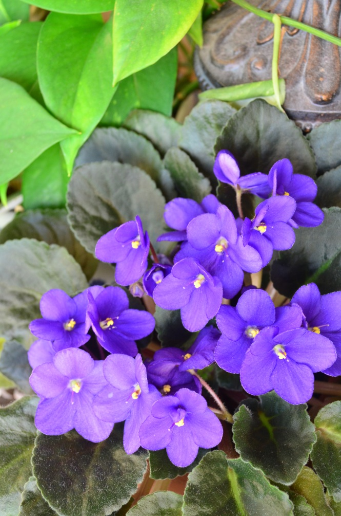 Violet faithfulness modesty meaning of flowers