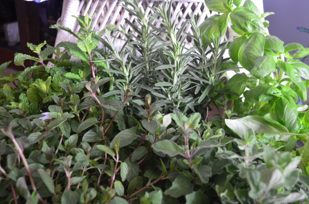 May Day A time to plant Garden where you are Tasha Tudor inspired herb garden